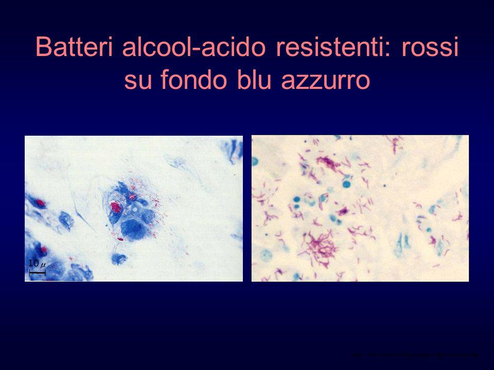 http://www.microbiologia.unige.it/dpb/indexxx.htm Batteri alcool-acido resistenti: rossi su fondo blu azzurro