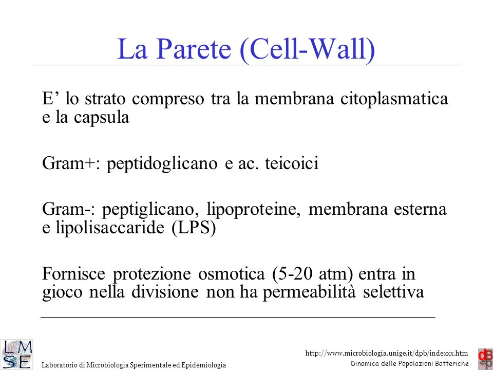 http://www.microbiologia.unige.it/dpb/indexxx.htm Dinamica delle Popolazioni Batteriche Laboratorio di Microbiologia Sperimentale ed Epidemiologia La