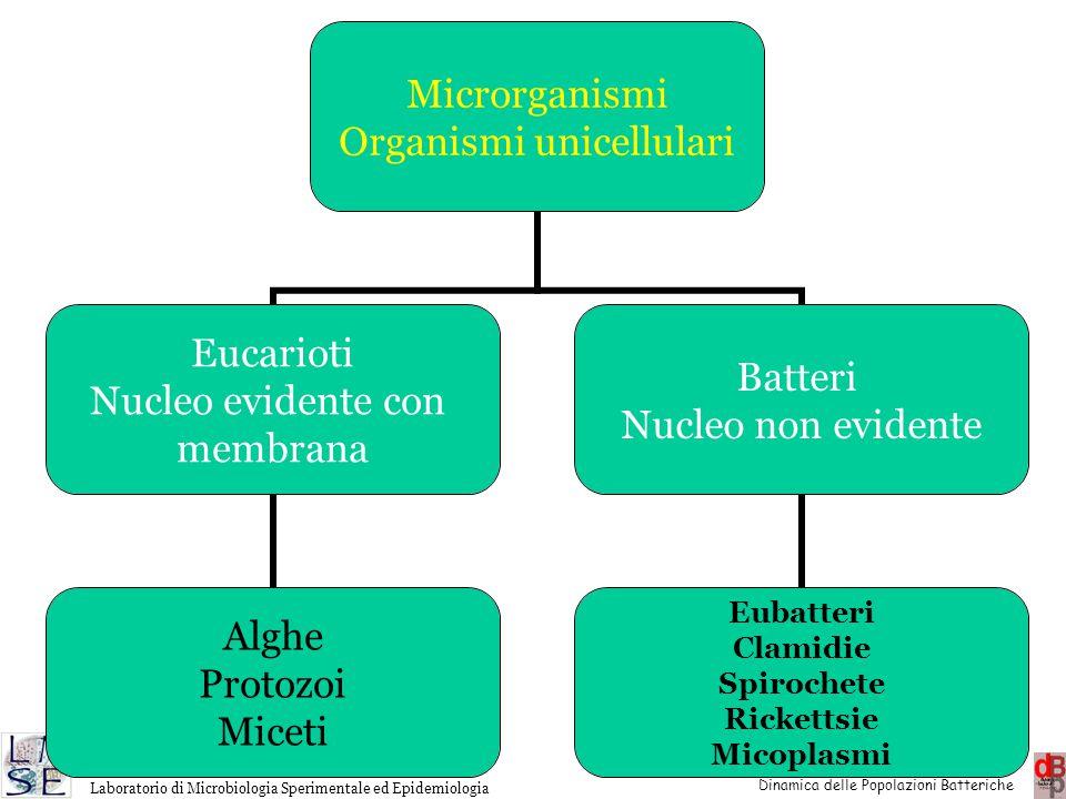 http://www.microbiologia.unige.it/dpb/indexxx.htm Dinamica delle Popolazioni Batteriche Laboratorio di Microbiologia Sperimentale ed Epidemiologia Mic