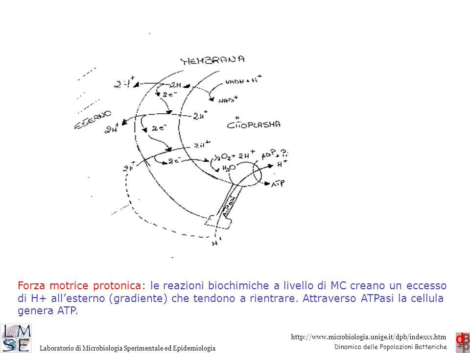 http://www.microbiologia.unige.it/dpb/indexxx.htm Dinamica delle Popolazioni Batteriche Laboratorio di Microbiologia Sperimentale ed Epidemiologia For