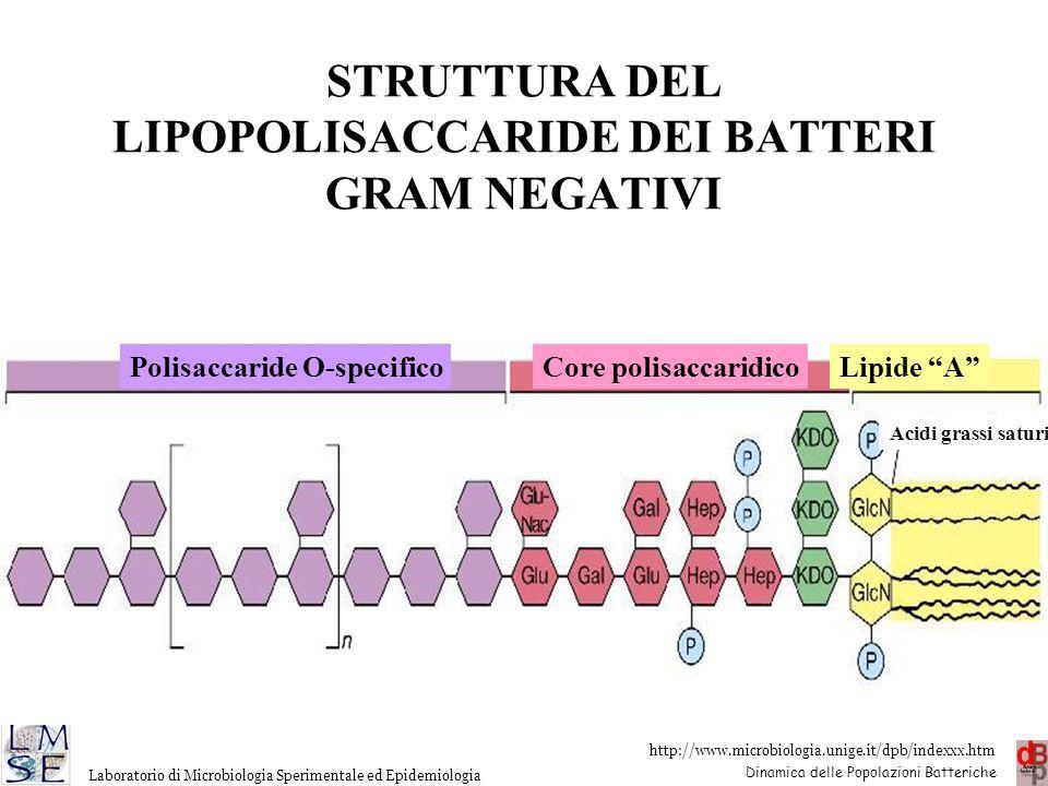 http://www.microbiologia.unige.it/dpb/indexxx.htm Dinamica delle Popolazioni Batteriche Laboratorio di Microbiologia Sperimentale ed Epidemiologia STR