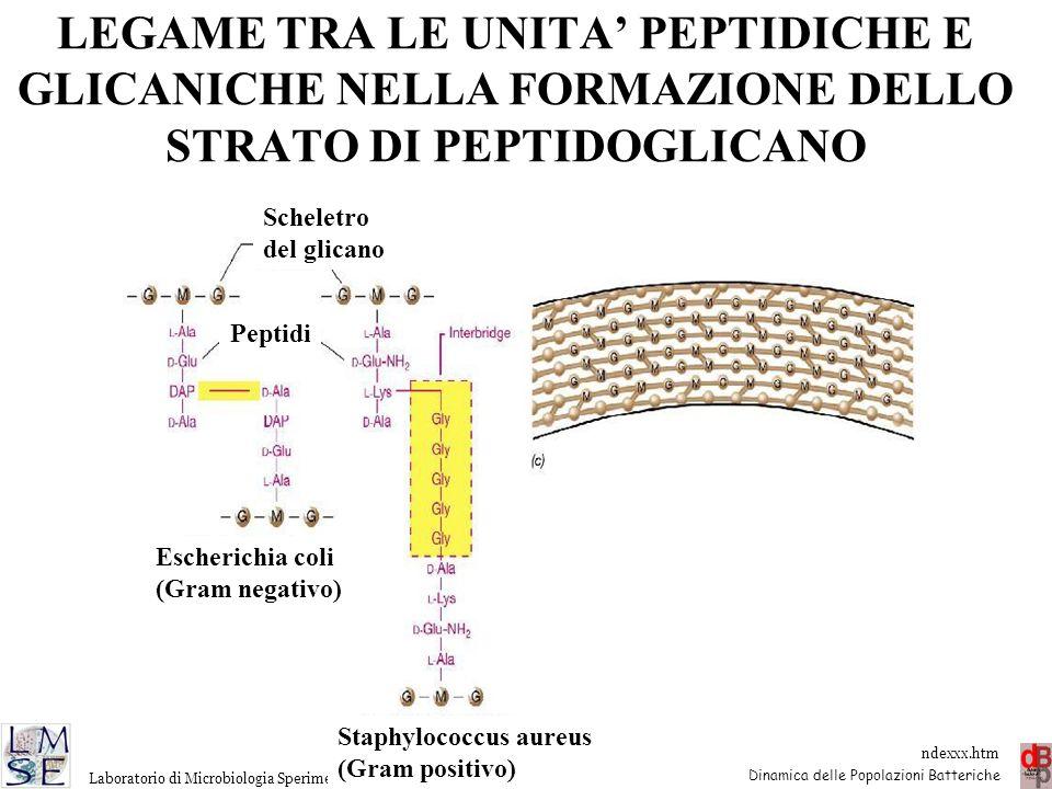 http://www.microbiologia.unige.it/dpb/indexxx.htm Dinamica delle Popolazioni Batteriche Laboratorio di Microbiologia Sperimentale ed Epidemiologia LEG