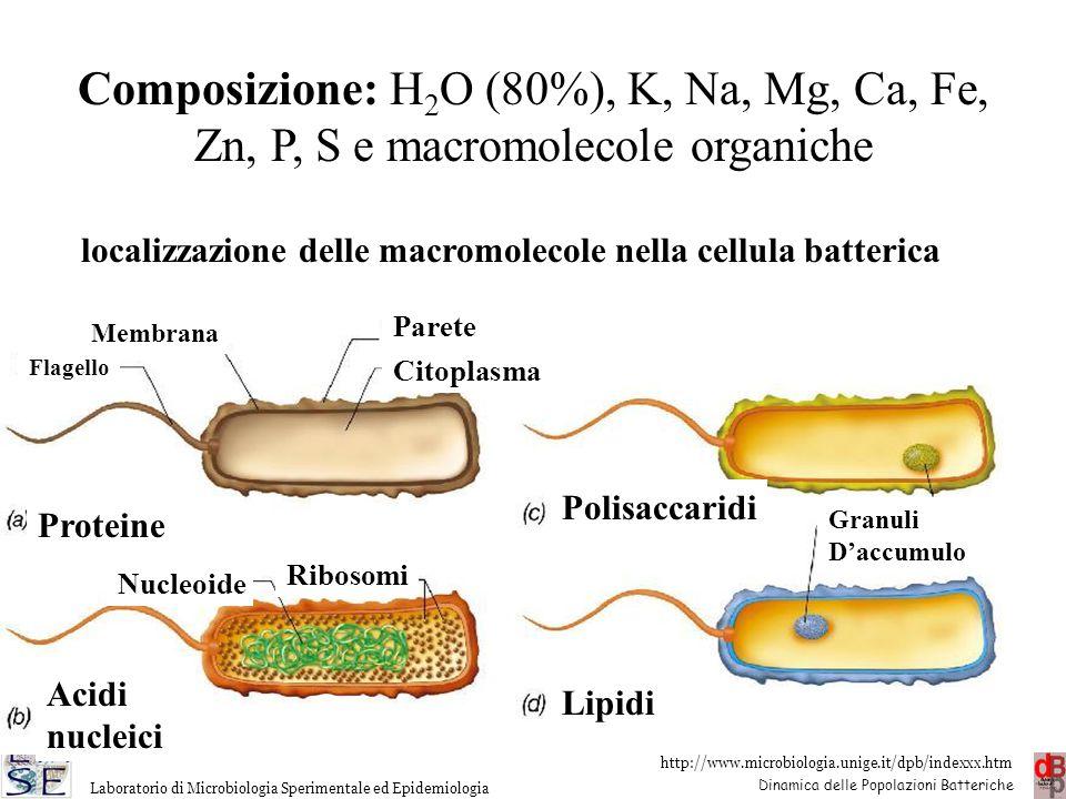 http://www.microbiologia.unige.it/dpb/indexxx.htm Dinamica delle Popolazioni Batteriche Laboratorio di Microbiologia Sperimentale ed Epidemiologia Pro