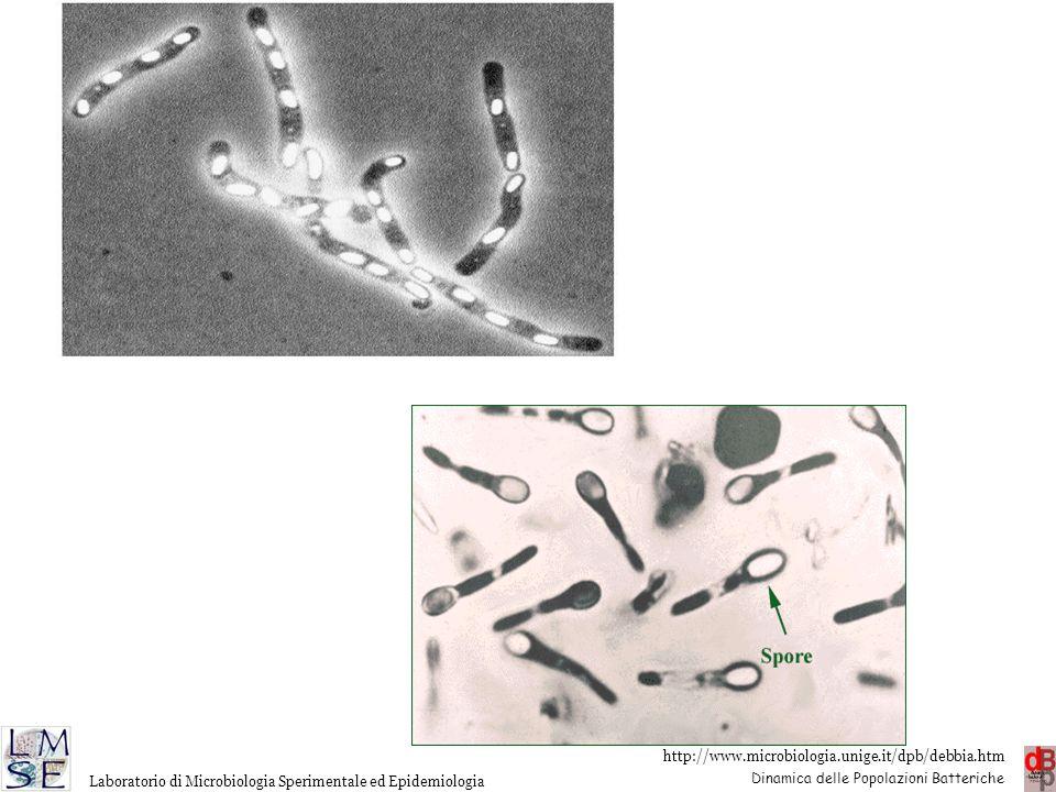 http://www.microbiologia.unige.it/dpb/debbia.htm Dinamica delle Popolazioni Batteriche Laboratorio di Microbiologia Sperimentale ed Epidemiologia