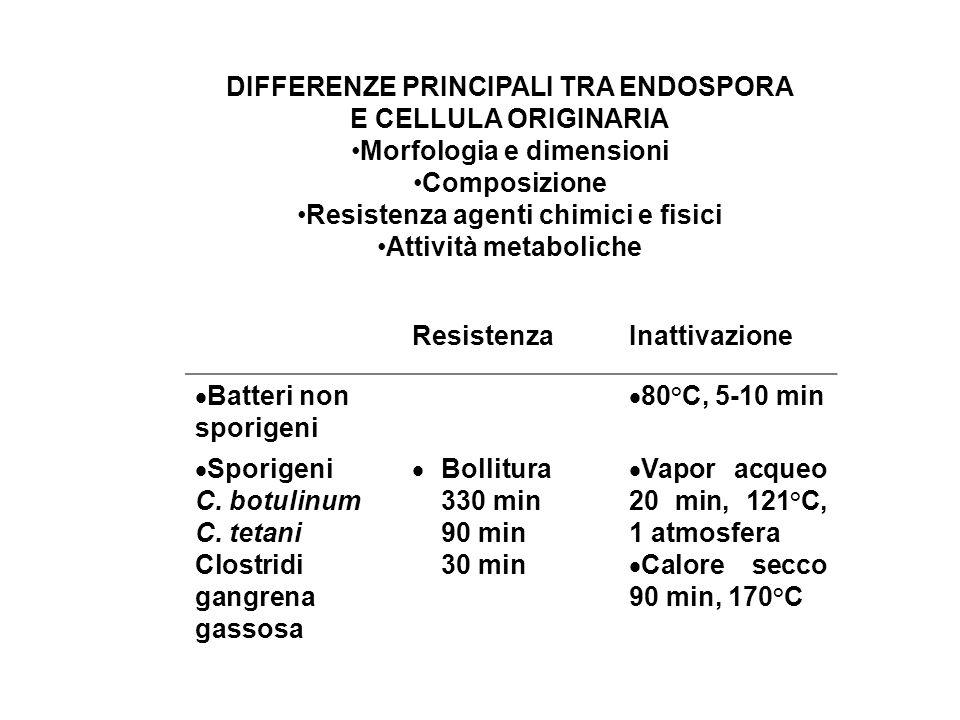 ResistenzaInattivazione  Batteri non sporigeni  80°C, 5-10 min  Sporigeni C. botulinum C. tetani Clostridi gangrena gassosa  Bollitura 330 min 90