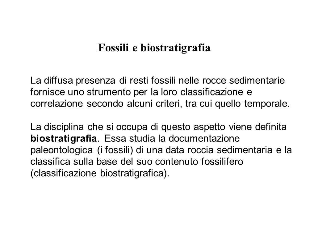 La diffusa presenza di resti fossili nelle rocce sedimentarie fornisce uno strumento per la loro classificazione e correlazione secondo alcuni criteri