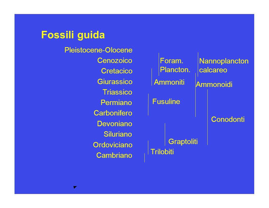Pleistocene-Olocene Cenozoico Cretacico Giurassico Triassico Permiano Carbonifero Devoniano Siluriano Ordoviciano Cambriano Proterozoico Arceano Fossi