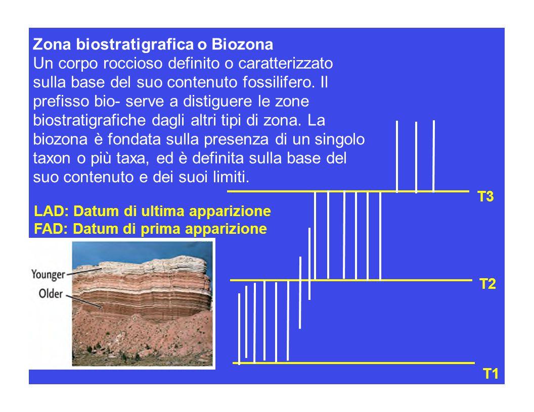 T1 T3 T2 Zona biostratigrafica o Biozona Un corpo roccioso definito o caratterizzato sulla base del suo contenuto fossilifero. Il prefisso bio- serve