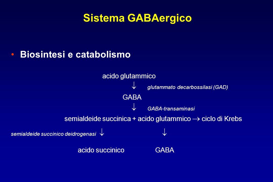 Biosintesi e catabolismo acido glutammico  glutammato decarbossilasi (GAD) GABA  GABA-transaminasi semialdeide succinica + acido glutammico  ciclo