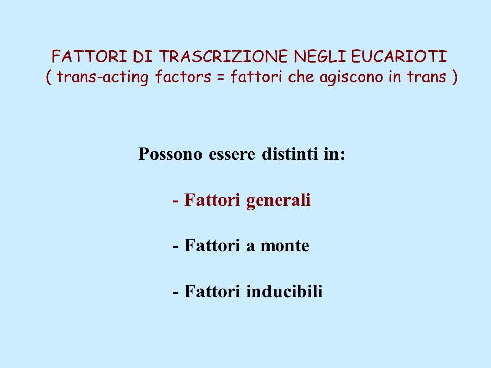 FATTORI DI TRASCRIZIONE NEGLI EUCARIOTI ( trans-acting factors = fattori che agiscono in trans ) Possono essere distinti in: - Fattori generali - Fattori a monte - Fattori inducibili