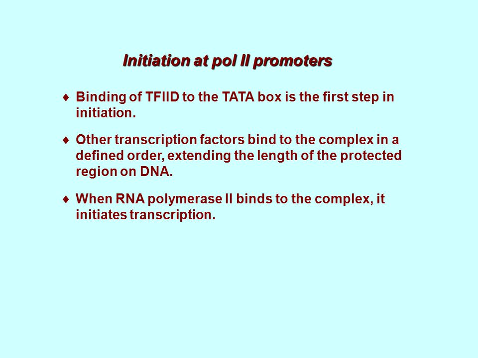 Initiation at pol II promoters  Binding of TFIID to the TATA box is the first step in initiation.