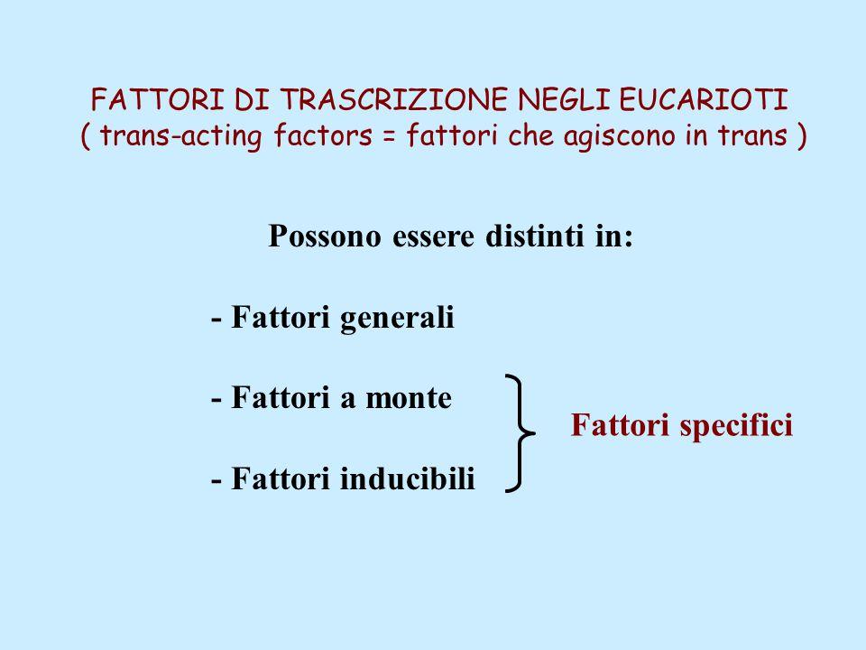 FATTORI DI TRASCRIZIONE NEGLI EUCARIOTI ( trans-acting factors = fattori che agiscono in trans ) Possono essere distinti in: - Fattori generali - Fattori a monte - Fattori inducibili Fattori specifici
