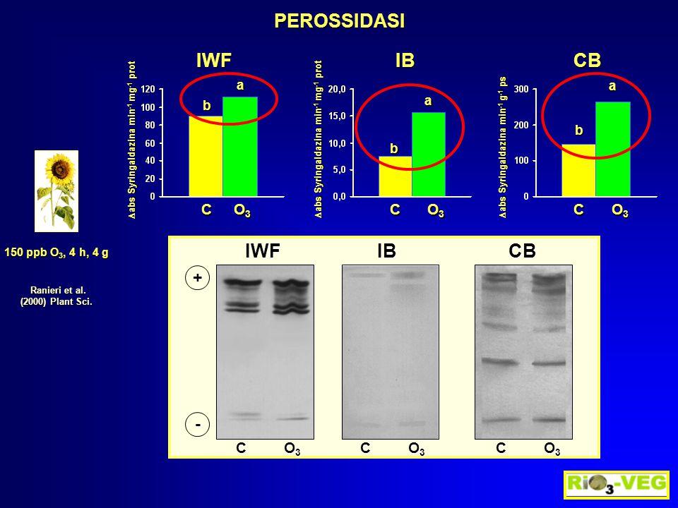 PEROSSIDASI 150 ppb O 3, 4 h, 4 g Ranieri et al. Ranieri et al. (2000) Plant Sci.  abs Syringaldazina min -1 mg -1 prot b a C O3O3O3O3  abs Syringal