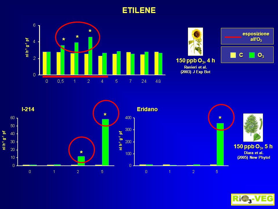 ETILENE C O3O3O3O3 esposizione all'O 3 Ranieri et al. (2003) J Exp Bot 150 ppb O 3, 4 h * * * nl h -1 g -1 pf Diara et al. (2005) New Phytol 150 ppb O