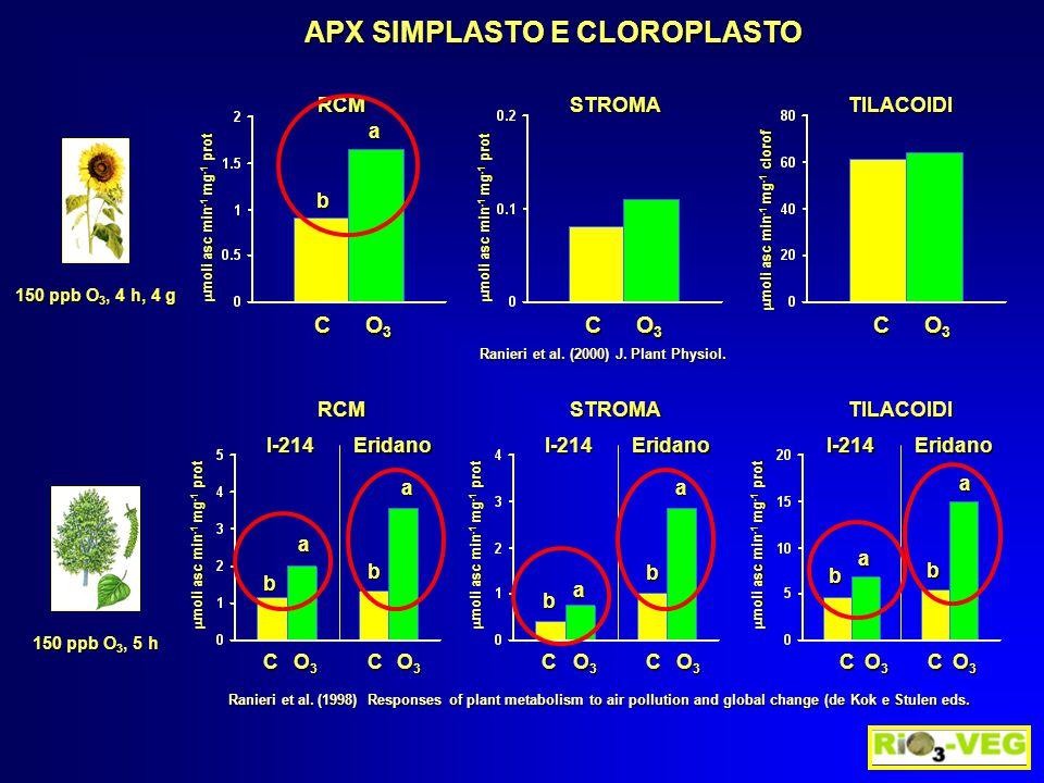 APX SIMPLASTO E CLOROPLASTO 150 ppb O 3, 5 h  moli asc min -1 mg -1 prot C O3O3O3O3C O3O3O3O3 b a b a I-214Eridano C O3O3O3O3C O3O3O3O3 b a b a I-214