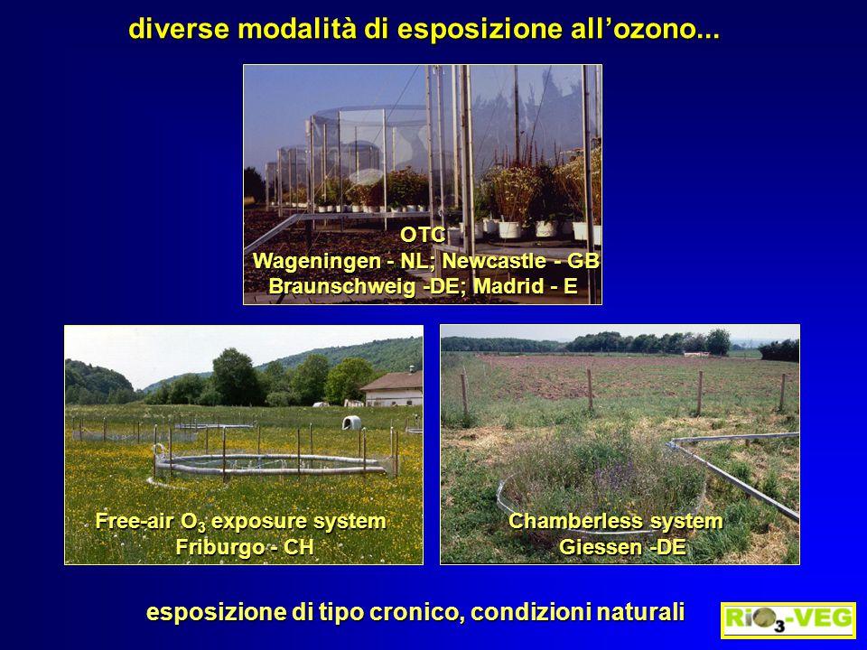 ETILENE C O3O3O3O3 esposizione all'O 3 Ranieri et al.