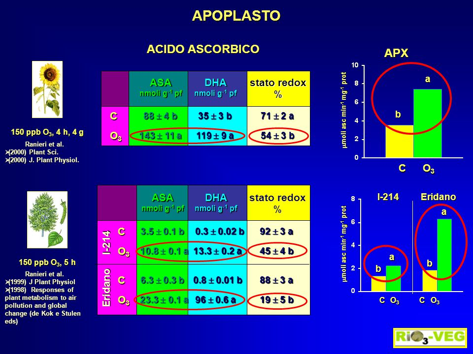 ASA nmoli g -1 pf DHA stato redox % C O3O3O3O3 88  4 b 35  3 b 71  2 a 143  11 a 119  9 a 54  3 b ASA nmoli g -1 pf DHA stato redox % C O3O3O3O3