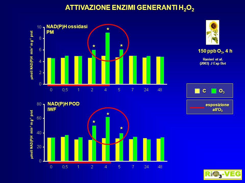 * * *  moli NAD(P)H min -1 m g -1 prot NAD(P)H POD IWF ATTIVAZIONE ENZIMI GENERANTI H 2 O 2 Ranieri et al. (2003) J Exp Bot 150 ppb O 3, 4 h C O3O3O3