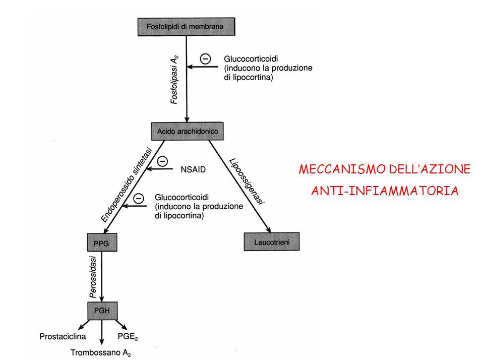 MECCANISMO DELL'AZIONE ANTI-INFIAMMATORIA