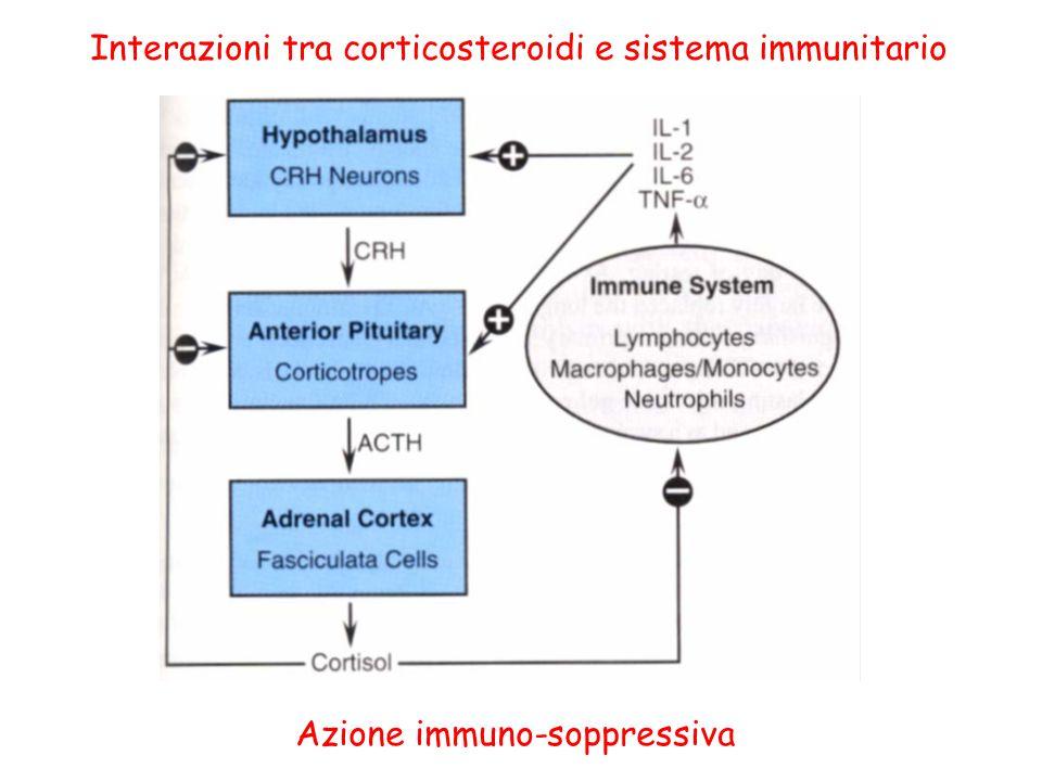 Interazioni tra corticosteroidi e sistema immunitario Azione immuno-soppressiva