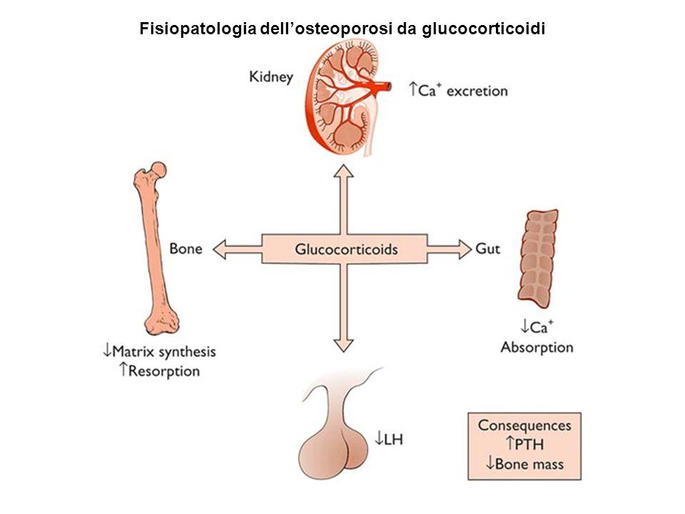 Fisiopatologia dell'osteoporosi da glucocorticoidi
