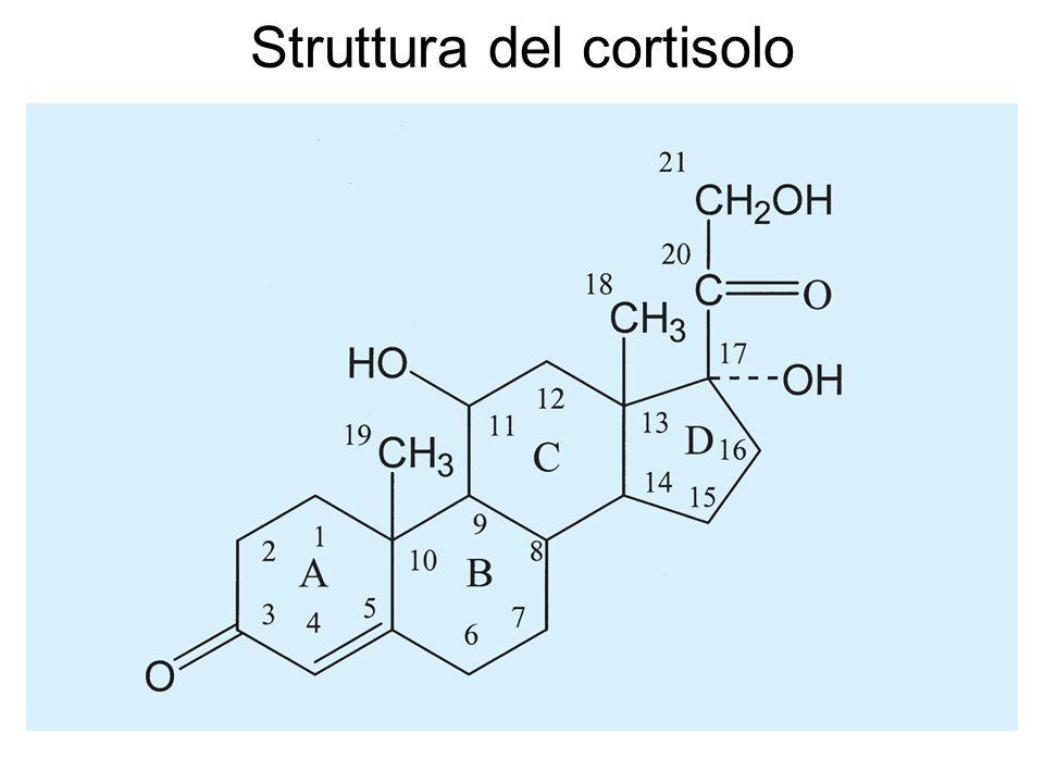 Vie biosintetiche degli ormoni corticosurrenalici.