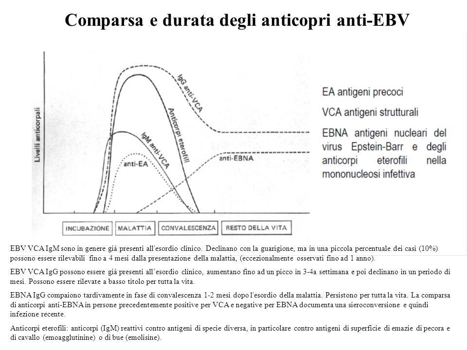 Comparsa e durata degli anticopri anti-EBV EBV VCA IgM sono in genere già presenti all esordio clinico.