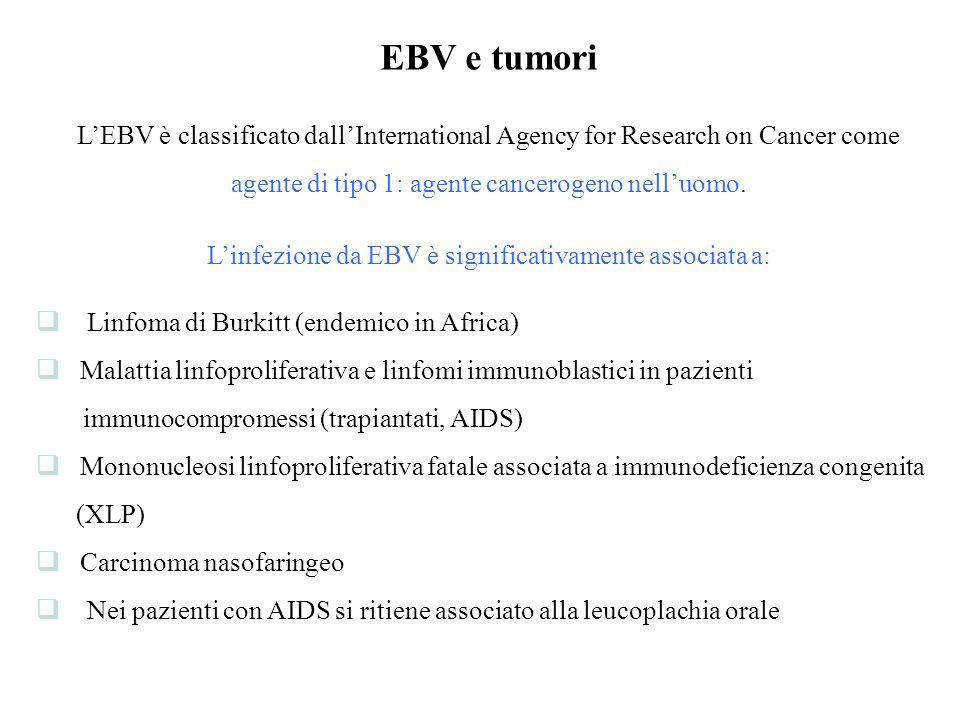 EBV e tumori L'EBV è classificato dall'International Agency for Research on Cancer come agente di tipo 1: agente cancerogeno nell'uomo.