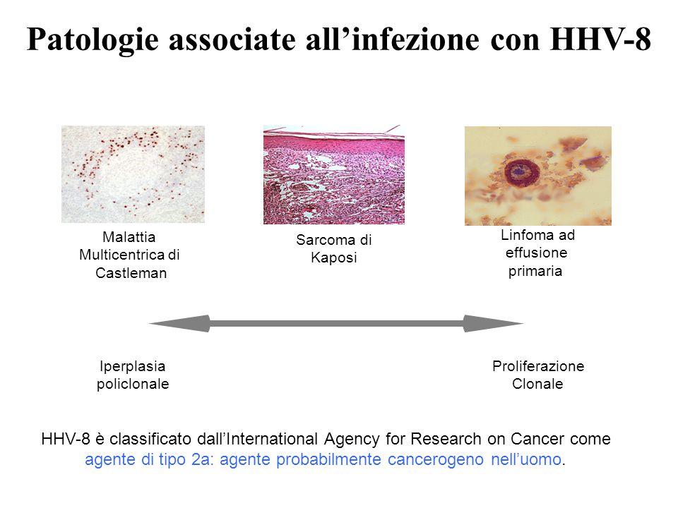 Patologie associate all'infezione con HHV-8 Sarcoma di Kaposi Linfoma ad effusione primaria Proliferazione Clonale Malattia Multicentrica di Castleman Iperplasia policlonale HHV-8 è classificato dall'International Agency for Research on Cancer come agente di tipo 2a: agente probabilmente cancerogeno nell'uomo.