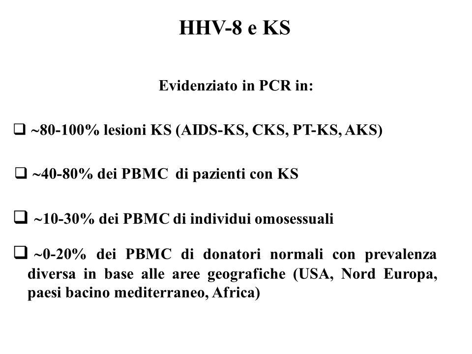 HHV-8 e KS   80-100% lesioni KS (AIDS-KS, CKS, PT-KS, AKS)   40-80% dei PBMC di pazienti con KS   10-30% dei PBMC di individui omosessuali   0-20% dei PBMC di donatori normali con prevalenza diversa in base alle aree geografiche (USA, Nord Europa, paesi bacino mediterraneo, Africa) Evidenziato in PCR in: