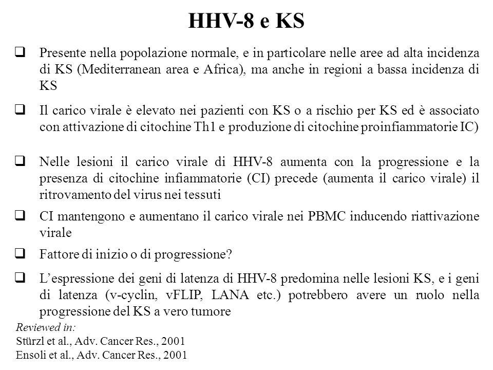 HHV-8 e KS  Presente nella popolazione normale, e in particolare nelle aree ad alta incidenza di KS (Mediterranean area e Africa), ma anche in regioni a bassa incidenza di KS  Il carico virale è elevato nei pazienti con KS o a rischio per KS ed è associato con attivazione di citochine Th1 e produzione di citochine proinfiammatorie IC)  Nelle lesioni il carico virale di HHV-8 aumenta con la progressione e la presenza di citochine infiammatorie (CI) precede (aumenta il carico virale) il ritrovamento del virus nei tessuti  CI mantengono e aumentano il carico virale nei PBMC inducendo riattivazione virale  Fattore di inizio o di progressione.
