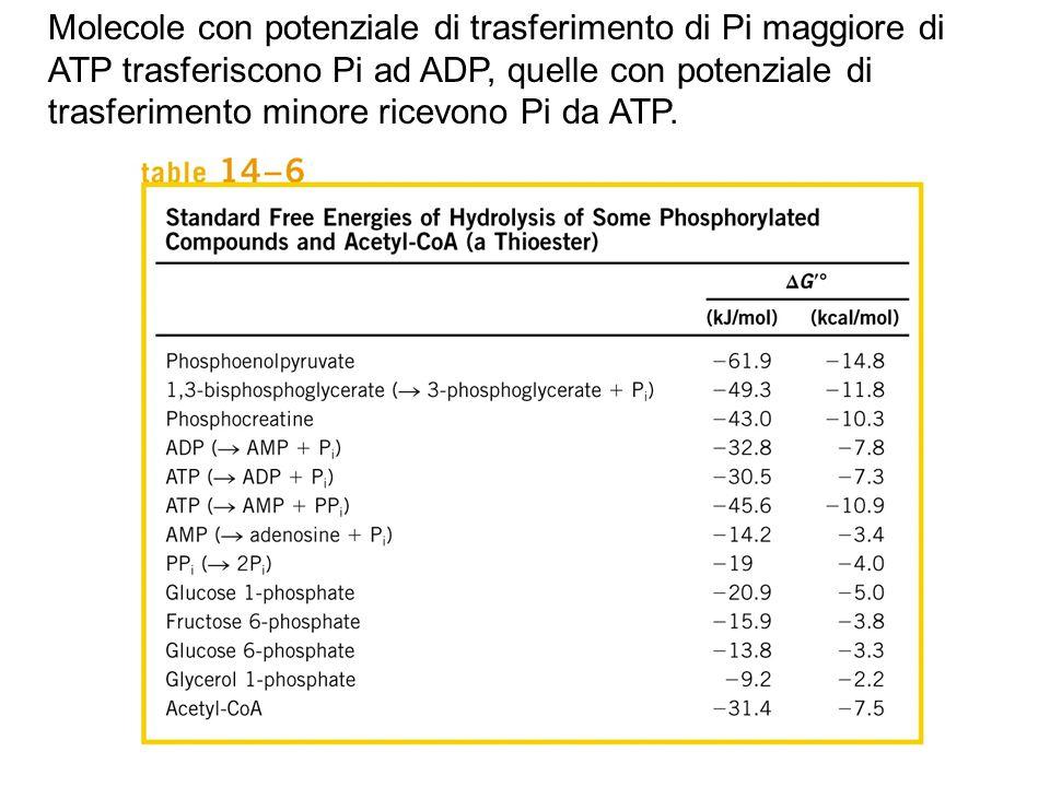 Molecole con potenziale di trasferimento di Pi maggiore di ATP trasferiscono Pi ad ADP, quelle con potenziale di trasferimento minore ricevono Pi da A
