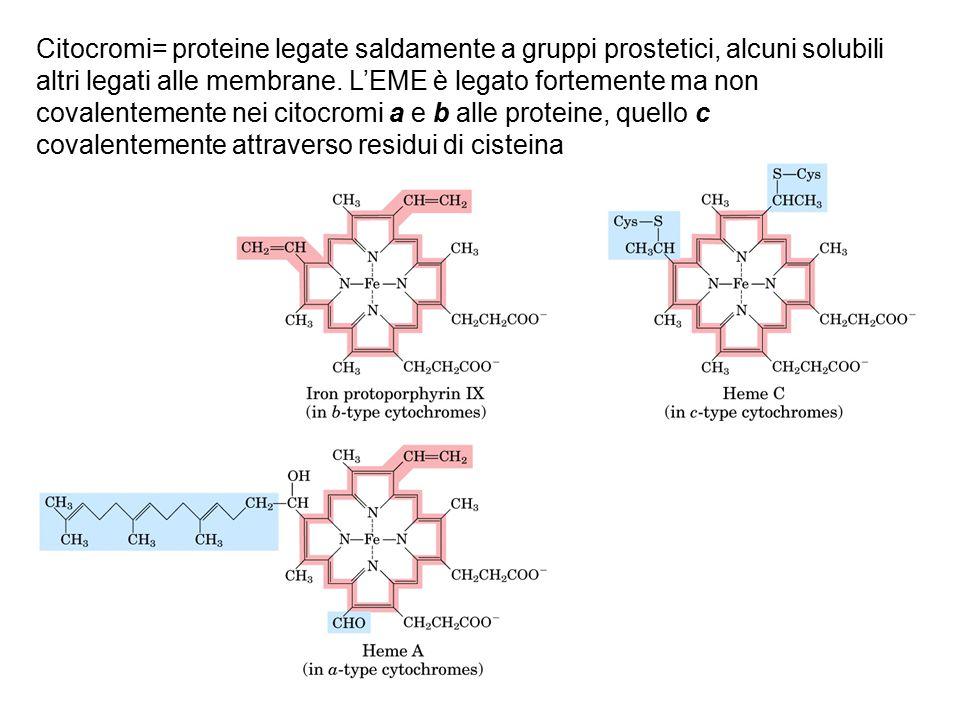 Citocromi= proteine legate saldamente a gruppi prostetici, alcuni solubili altri legati alle membrane. L'EME è legato fortemente ma non covalentemente