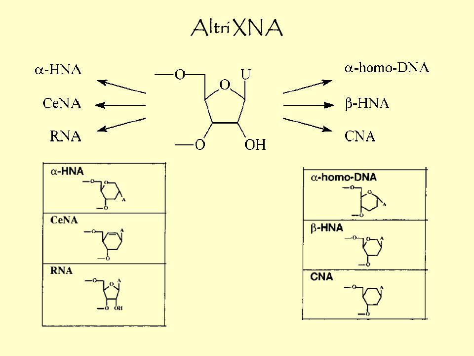 Anche legami peptidici possono rimpiazzare il ribosio (PNA achirali) e accoppiare DNA e RNA (Nielsen) PNA G T A N NH NH 2 N O O N NH NH N O O CONH 2 O O O C RNA C A OH O O O P O O O O OH P O O O - O O P O O O - O - HO HO HO HO T G