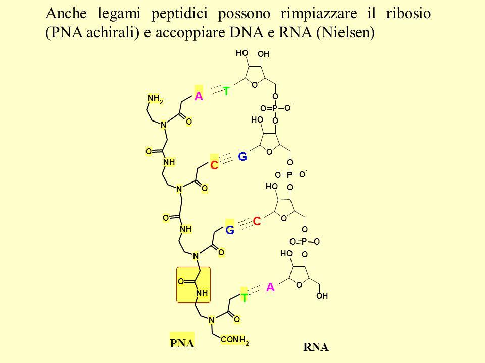 Anche legami peptidici possono rimpiazzare il ribosio (PNA achirali) e accoppiare DNA e RNA (Nielsen) PNA G T A N NH NH 2 N O O N NH NH N O O CONH 2 O