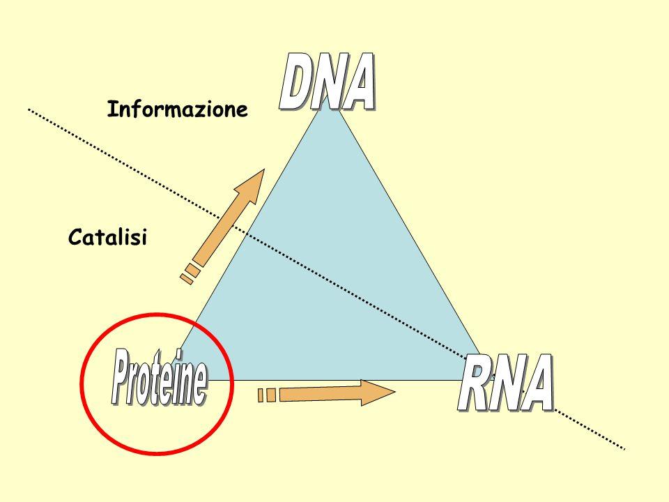 Informazione Catalisi