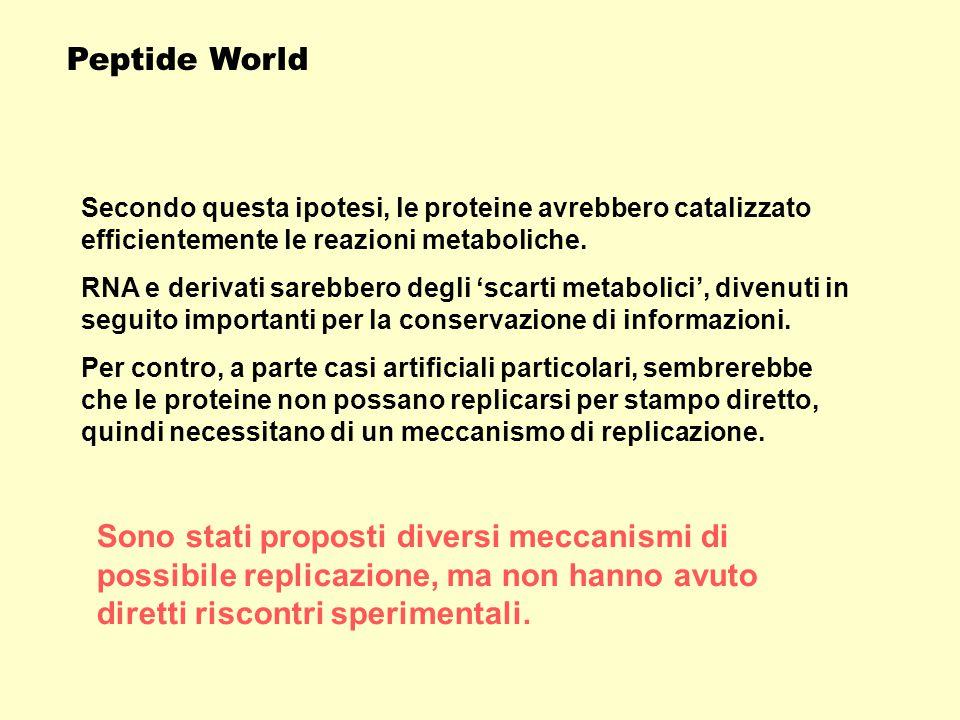 Per molti il Peptide World rappresenterebbe solo un mondo di passaggio per il successivo RNA World.