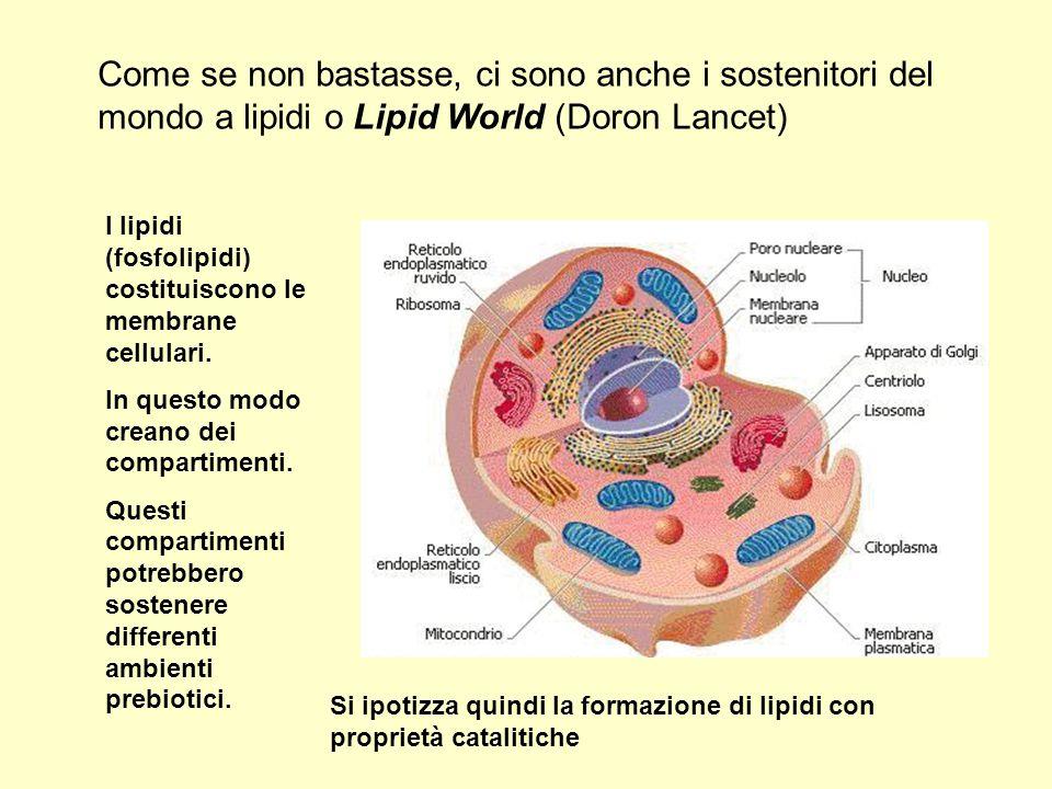 Come se non bastasse, ci sono anche i sostenitori del mondo a lipidi o Lipid World (Doron Lancet) I lipidi (fosfolipidi) costituiscono le membrane cel
