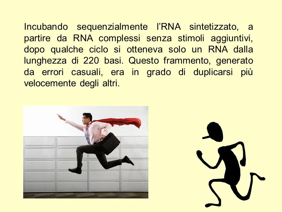 Con molta sorpresa, ripetendo l'esperimento ma diminuendo la quantità di RNA stampo fino alla presenza dei soli monomeri, si può generare RNA ex novo.