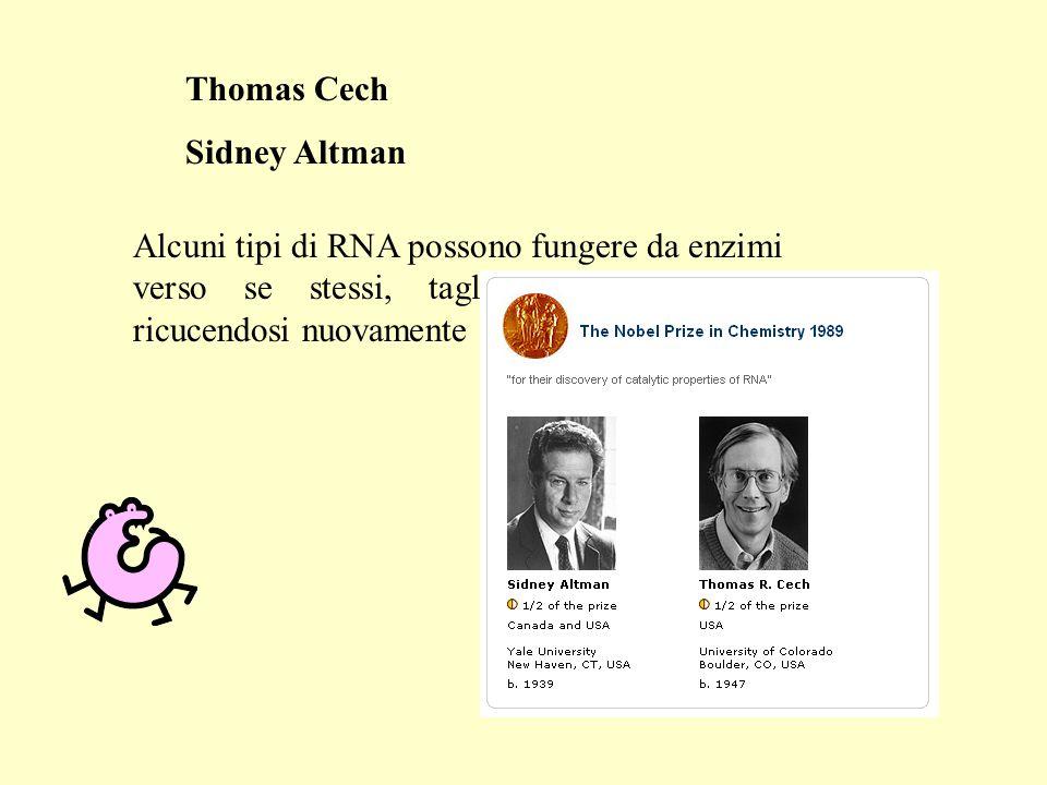 Thomas Cech Sidney Altman Alcuni tipi di RNA possono fungere da enzimi verso se stessi, tagliandosi in due e ricucendosi nuovamente