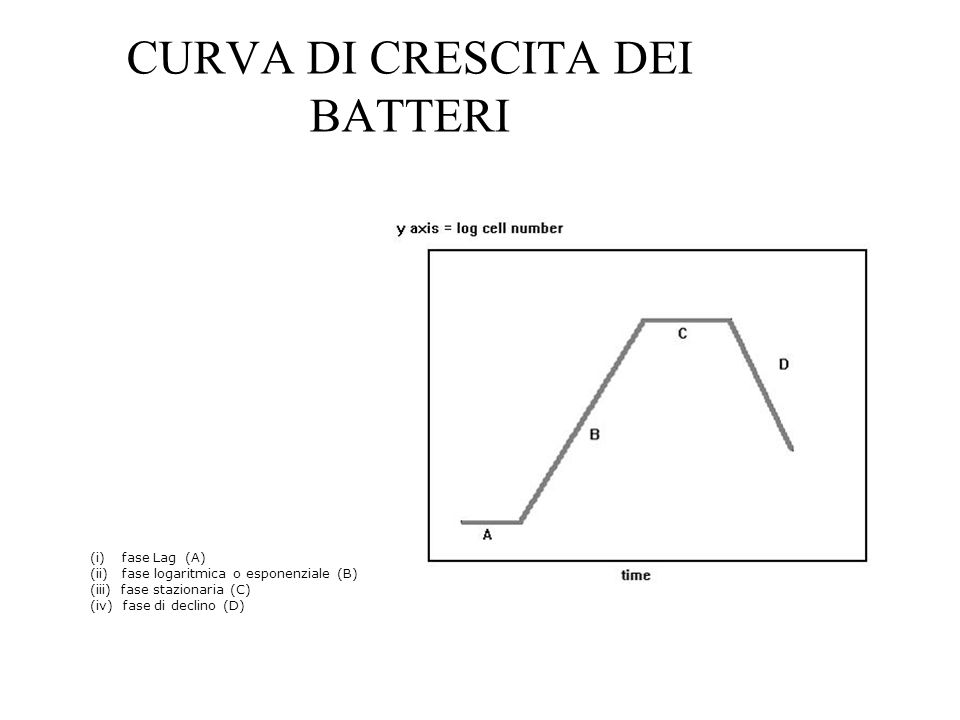 CURVA DI CRESCITA DEI BATTERI (i) fase Lag (A) (ii) fase logaritmica o esponenziale (B) (iii) fase stazionaria (C) (iv) fase di declino (D)