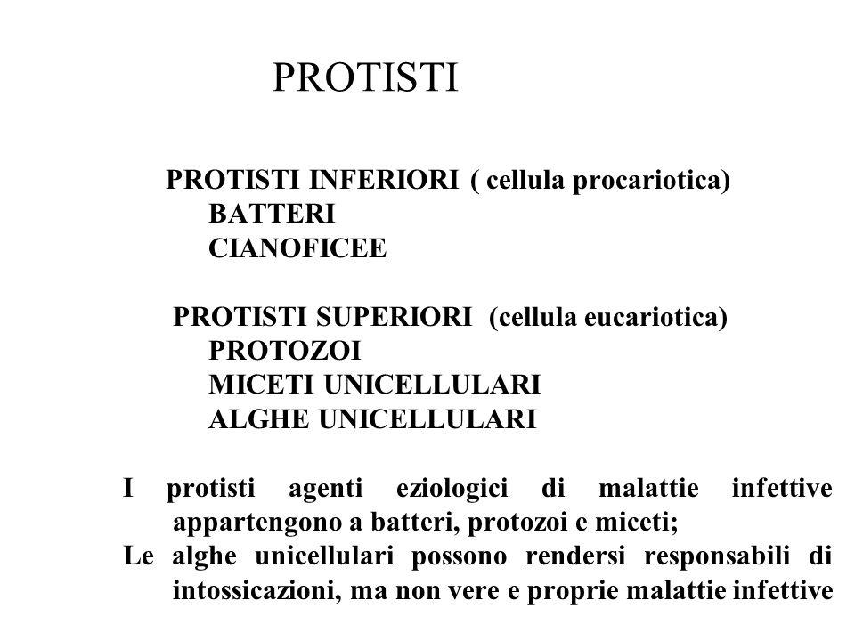 PROTISTI PROTISTI INFERIORI ( cellula procariotica) BATTERI CIANOFICEE PROTISTI SUPERIORI (cellula eucariotica) PROTOZOI MICETI UNICELLULARI ALGHE UNI