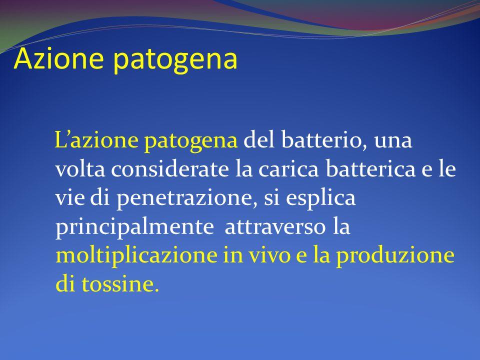 Azione patogena L'azione patogena del batterio, una volta considerate la carica batterica e le vie di penetrazione, si esplica principalmente attraverso la moltiplicazione in vivo e la produzione di tossine.