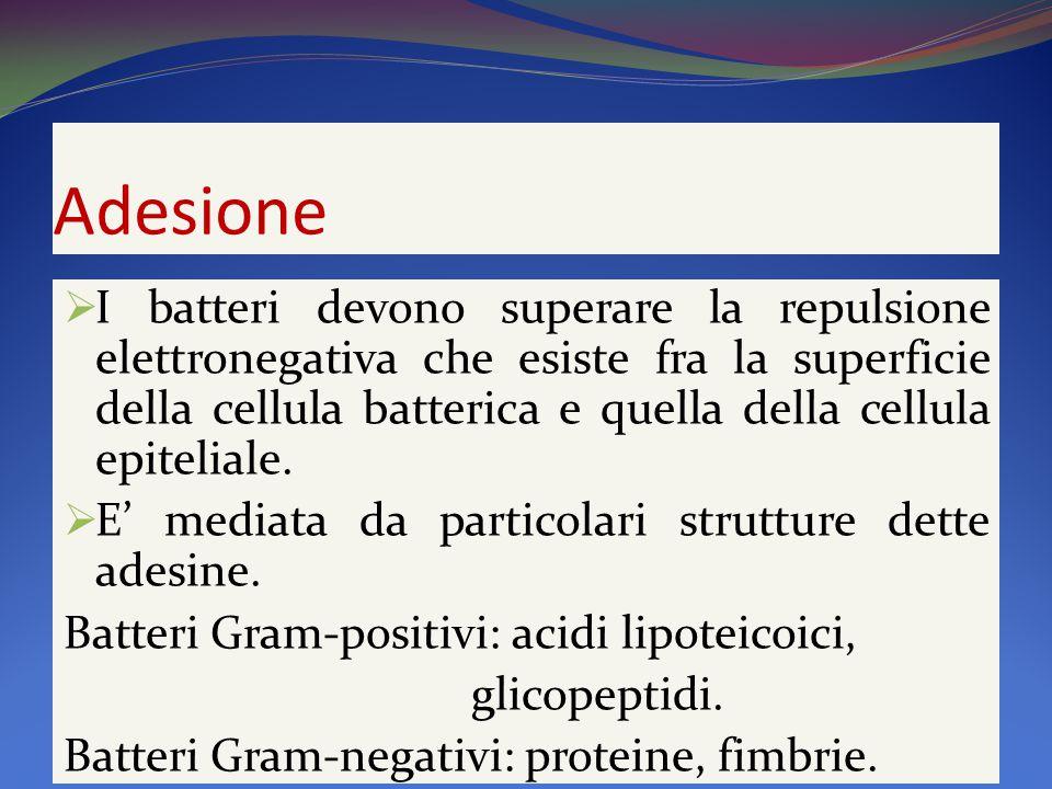 Adesione  I batteri devono superare la repulsione elettronegativa che esiste fra la superficie della cellula batterica e quella della cellula epiteliale.