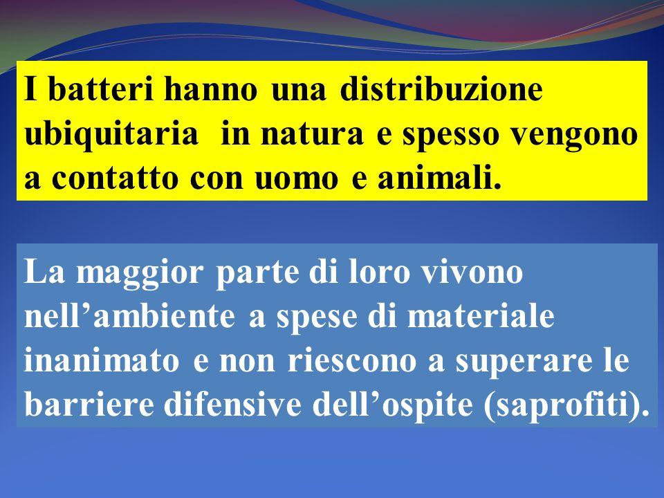 I batteri hanno una distribuzione ubiquitaria in natura e spesso vengono a contatto con uomo e animali.