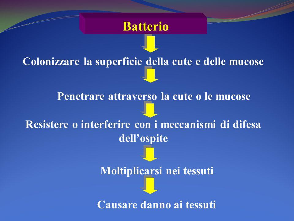 Batterio Penetrare attraverso la cute o le mucose Resistere o interferire con i meccanismi di difesa dell'ospite Moltiplicarsi nei tessuti Causare danno ai tessuti Colonizzare la superficie della cute e delle mucose
