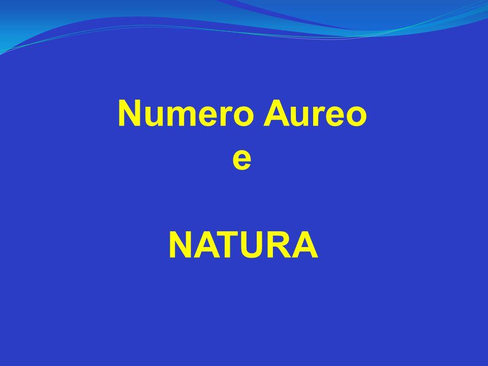 Numero Aureo e NATURA
