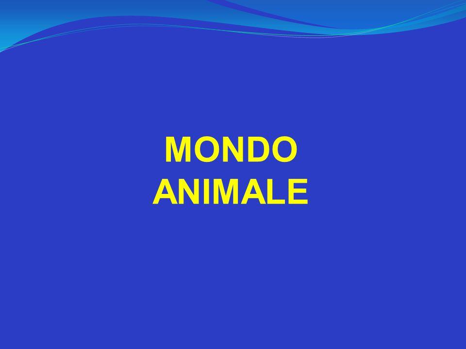 MONDO ANIMALE