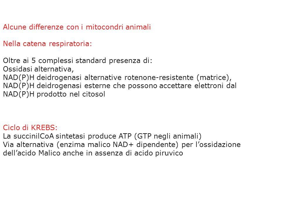 Mitocondri: reazioni del ciclo di KREBS