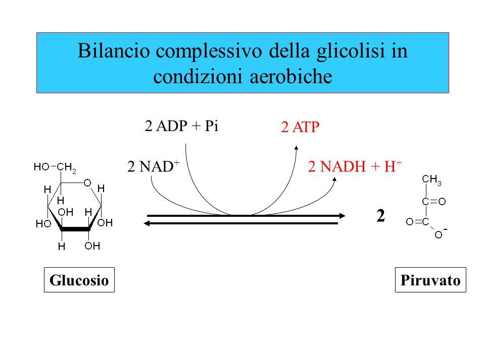Bilancio complessivo della glicolisi in condizioni aerobiche 2 ATP 2 ADP + Pi Glucosio 2 Piruvato 2 NAD + 2 NADH + H +